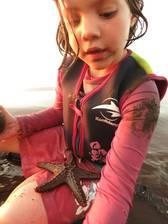 Ein Seestern am Strand - nur kurz mit spielen, dann darf er wieder in's Meer