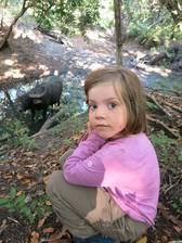 Ein Wasserbüffel auf Rinca