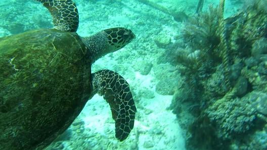 Eine von etlichen Meeresschildkröten
