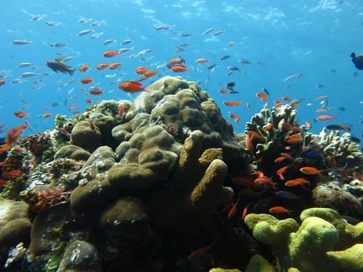 Bunte Korallenriffe gibt's hier mit allem was man sich nur so wünschen kann
