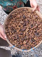 getrocknete Luwak-Kacke - der Grundstoff für eine exklusive Köstlichkeit