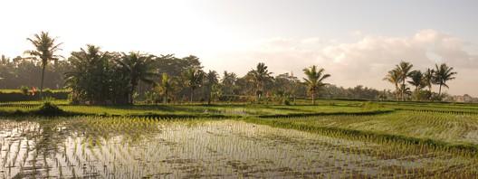 Trubel, traditionelle Tänze & Reisfelder