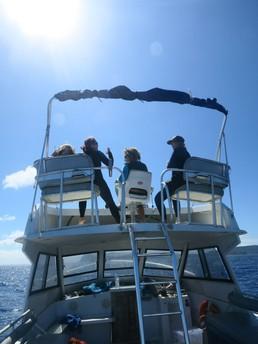 Mit dem Boot auf Wal-Suche